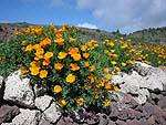 Heel mooi als de bloempjes van Vilaflor in bloei staan. (Foto Frank Catry)