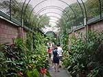 Botanische tuin tenerife for Botanische tuin tenerife